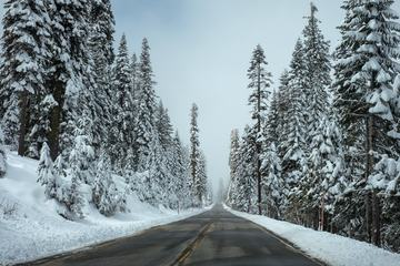 Winter Road Trees Covered with Snow