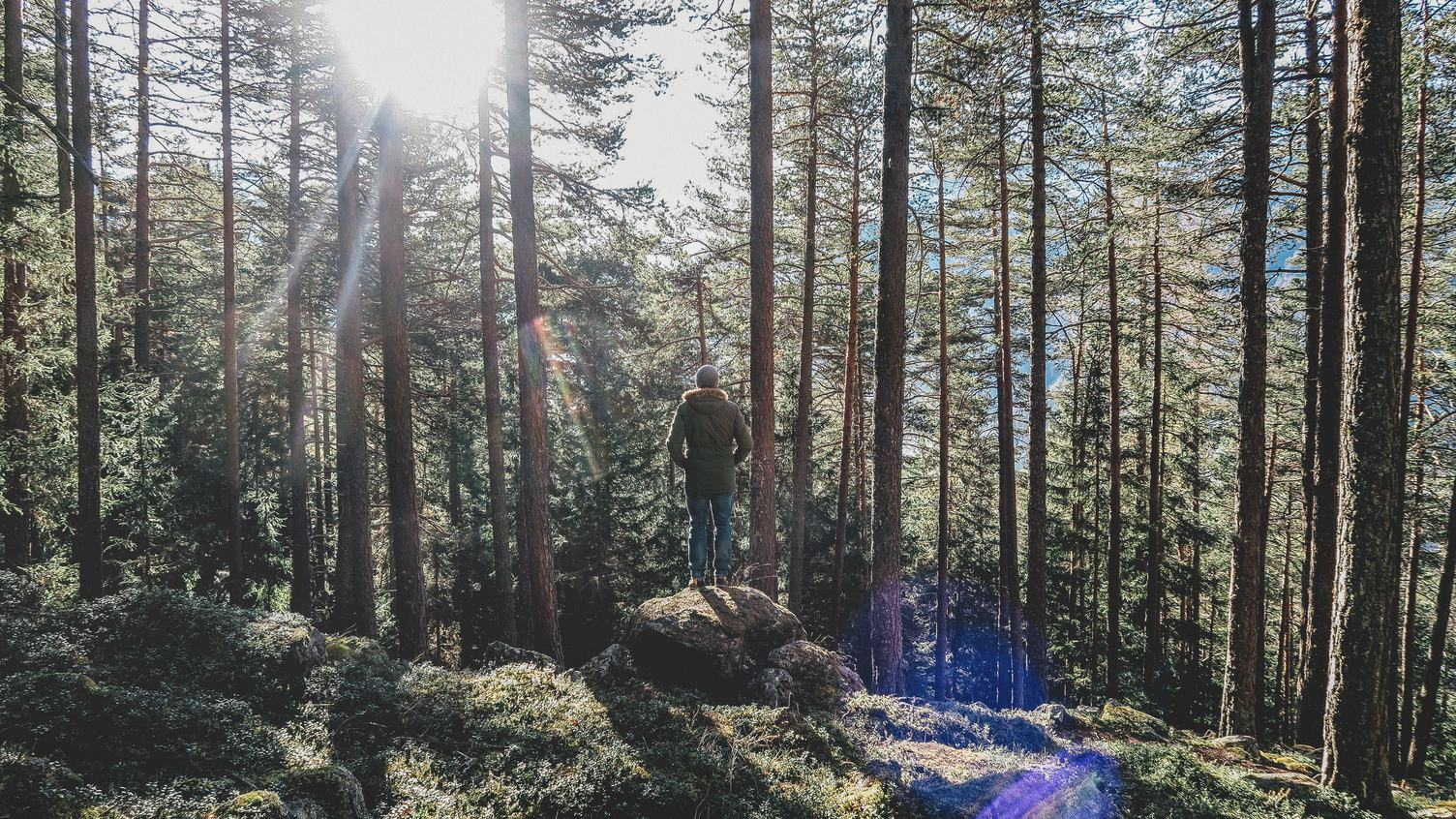 Man Standing on the Rock in the Middle of Forest