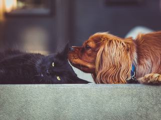 The Black Cat and Dog