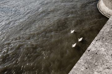 Three Swans Floating on the River