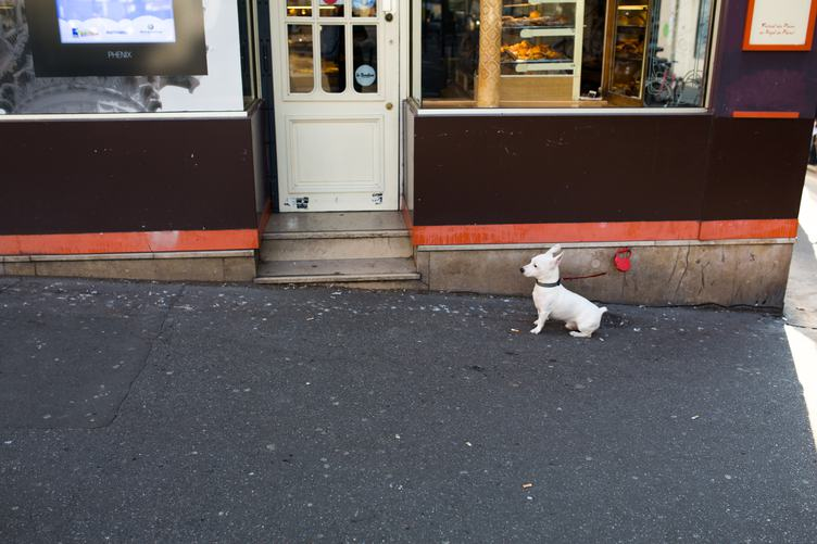 Little White Dog Waiting by the Bakery Entrance