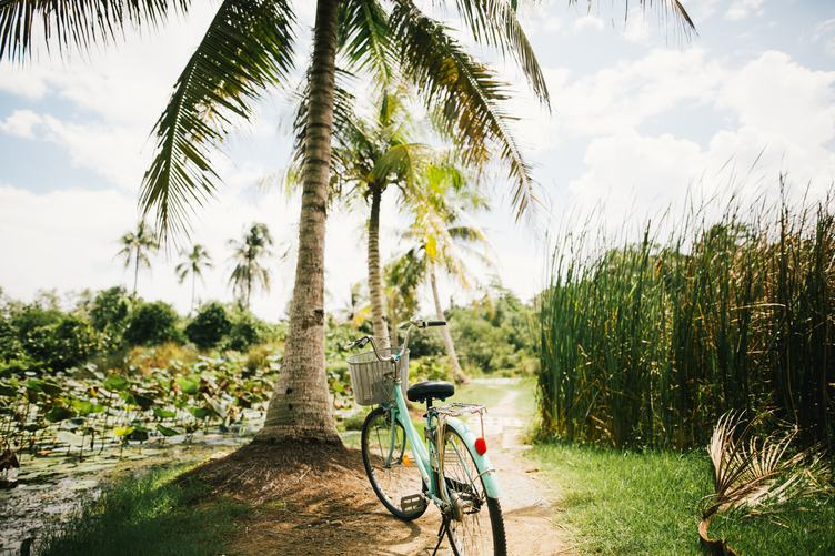 Bicycle with a Basket Parked under a Palm Tree