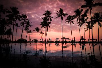Sunset with Palm Trees and Umbrellas
