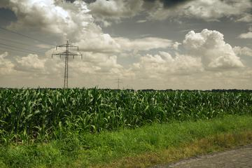 Cornfield and the Power Lines