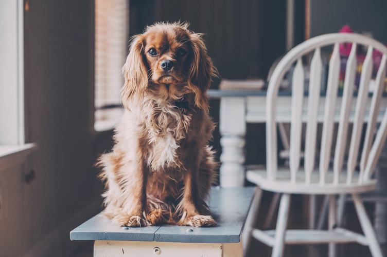 Dog Sitting on a Bench