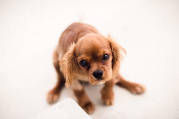 Sad Puppy Looking up