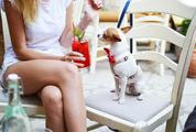 Girl with Her Dog in a Bar Drinking Cocktail
