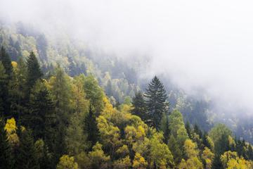 Misty Forest on the Mountain