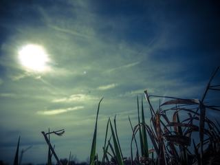 Grass Blades Against Blue Sky with Clouds