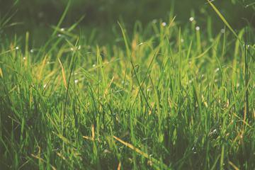 Lush Spring Green Grass