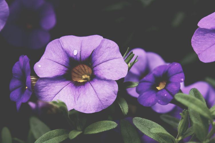 Beautiful Purple Flowers Blooming in the Garden
