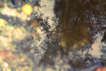 The Reflection of Tree a Puddle in Forest