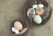 Easter Composition with Bird Nest Eggs and Quail Feathers