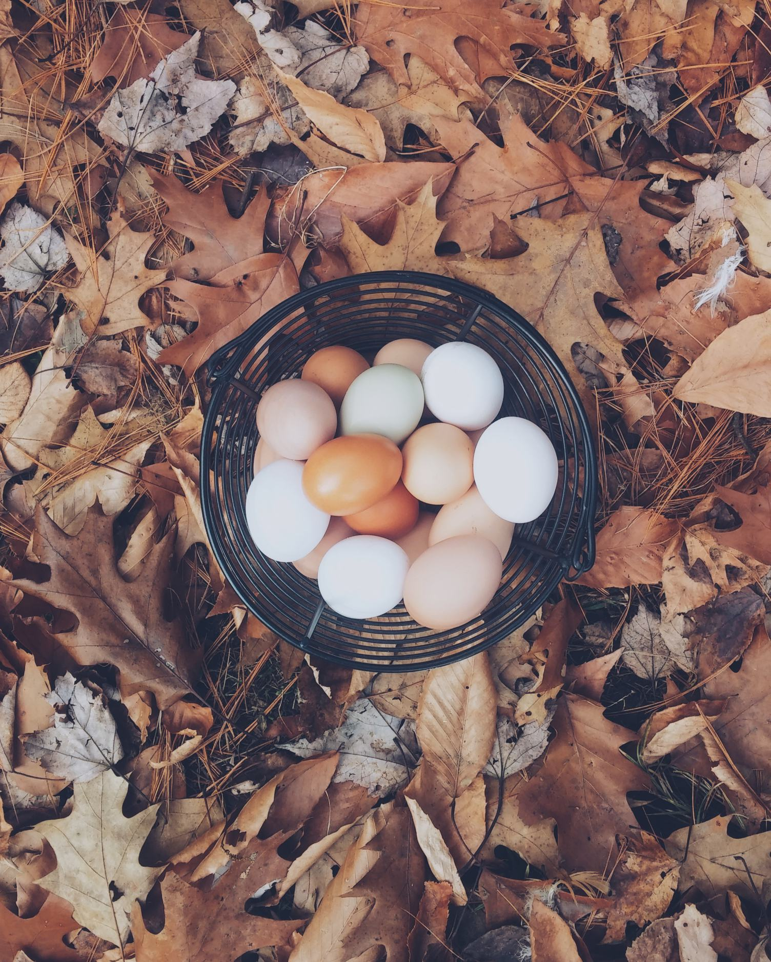 Autumn Composition of Eggs in a Basket on Acorn Leaves