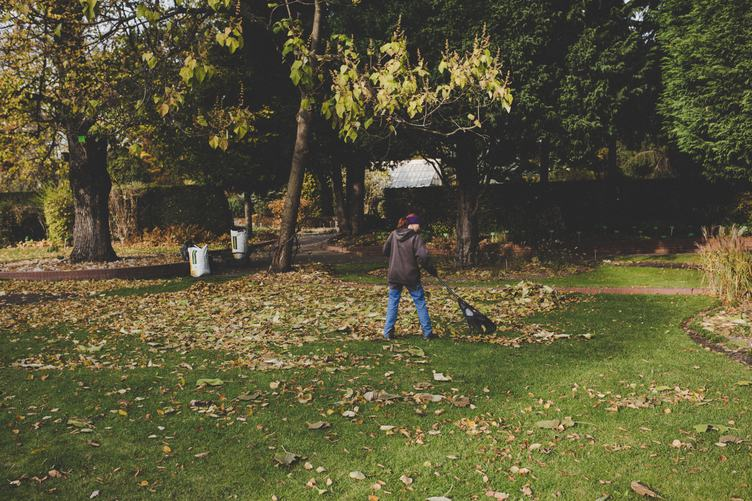 Woman Raking Fall Leaves with Rake