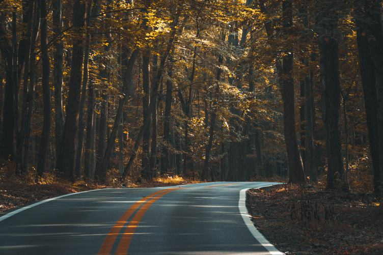 Road Curves Through Autumn Forest