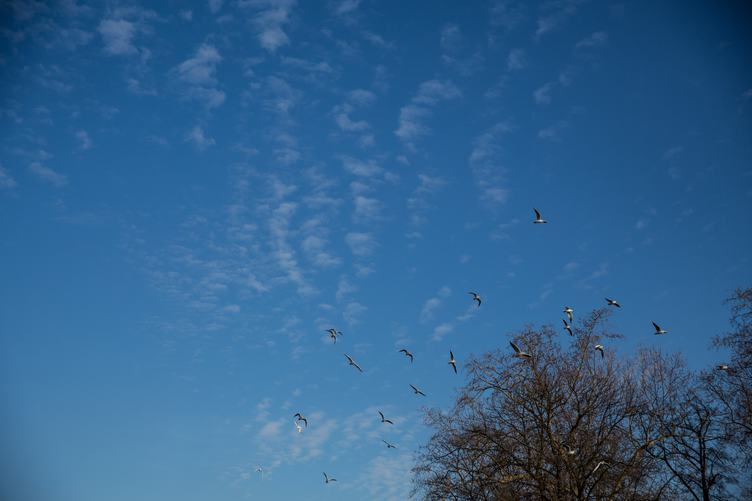 Birds Flying over Trees against a Blue Sky