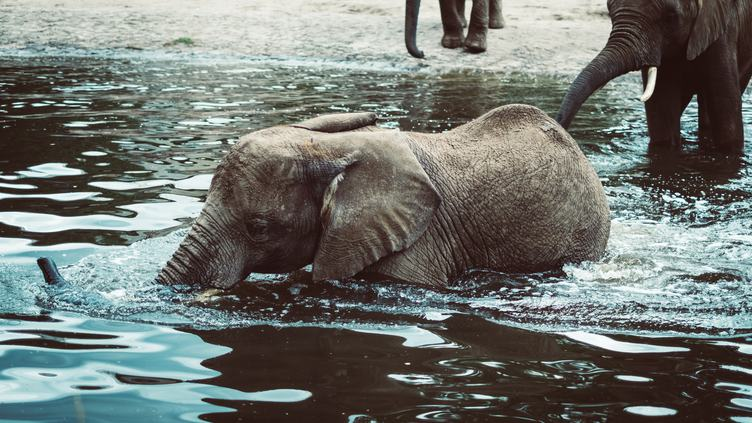 Small Elephant Bathing at the River