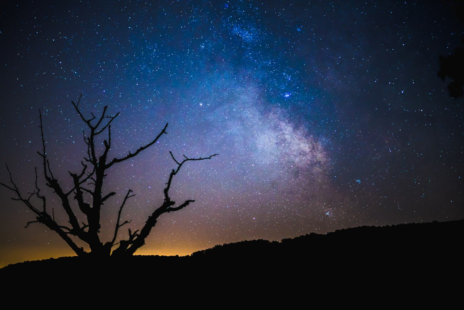 Sky at Night with Stars and Silhouette of a Tree