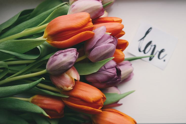 Bouquet of Orange and Violet Fresh Spring Tulips