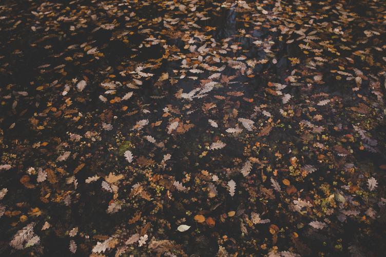 Autumn Texture Brown Oak Leaves Background