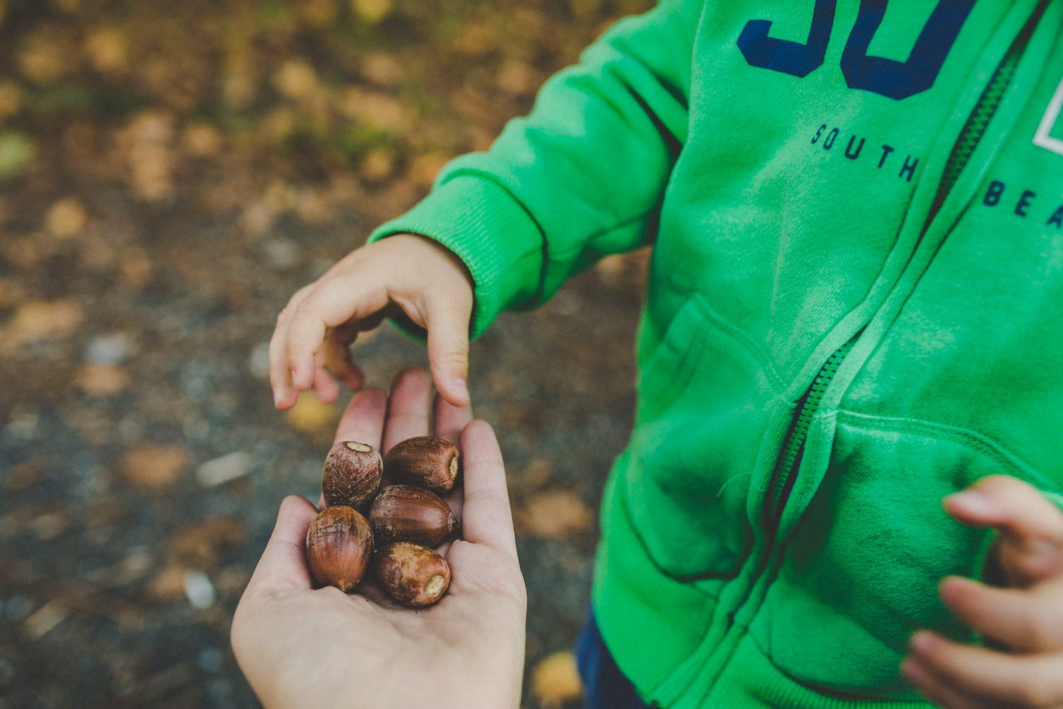 Little Boy in Autumn Park Taking a Handful of Acorns