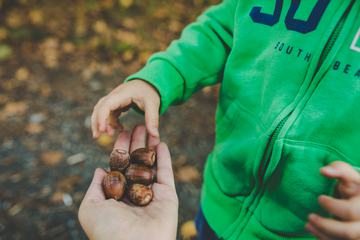 Little Boy in Autumn Park Taking a Handful of Acorns