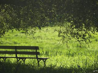 Bench in the Grass Under the Tree