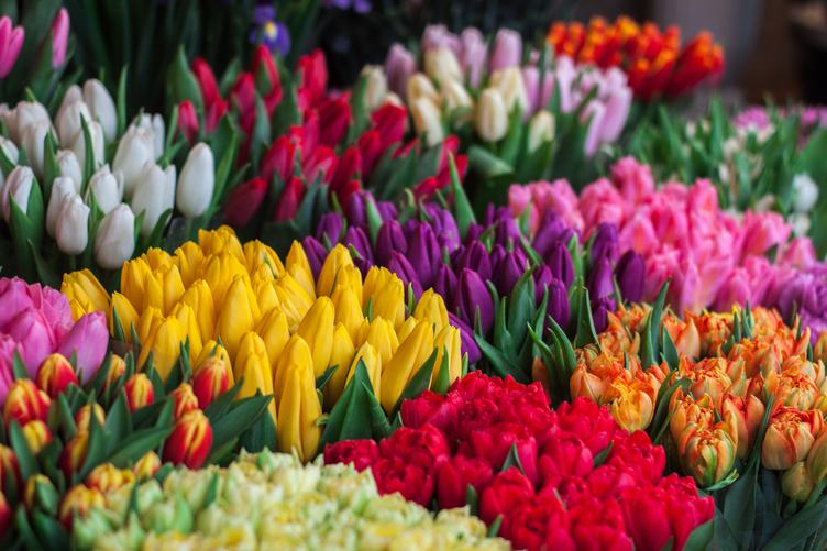 Bunches of Tulips for Sale