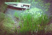 Wooden Rowing Boat on Wetlands