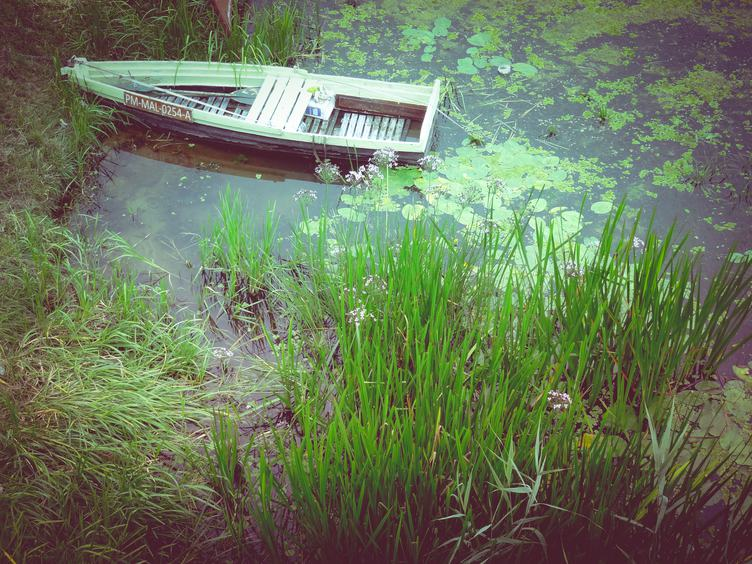 Wooden Rowing Boat on Wetlands