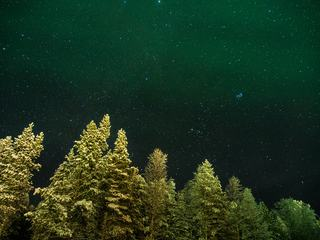 Long Exposure of Stars over the Trees