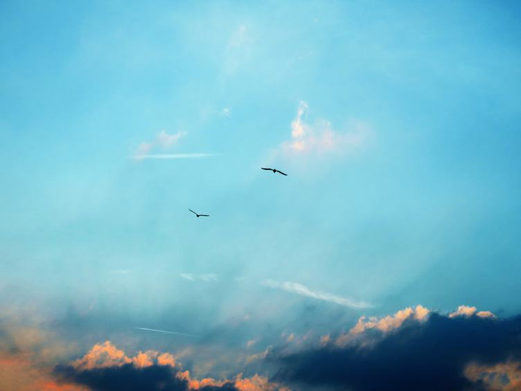 Two Birds on Cloudy Blue sky