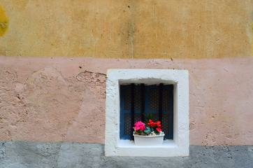 Old Window with Plants in Pot