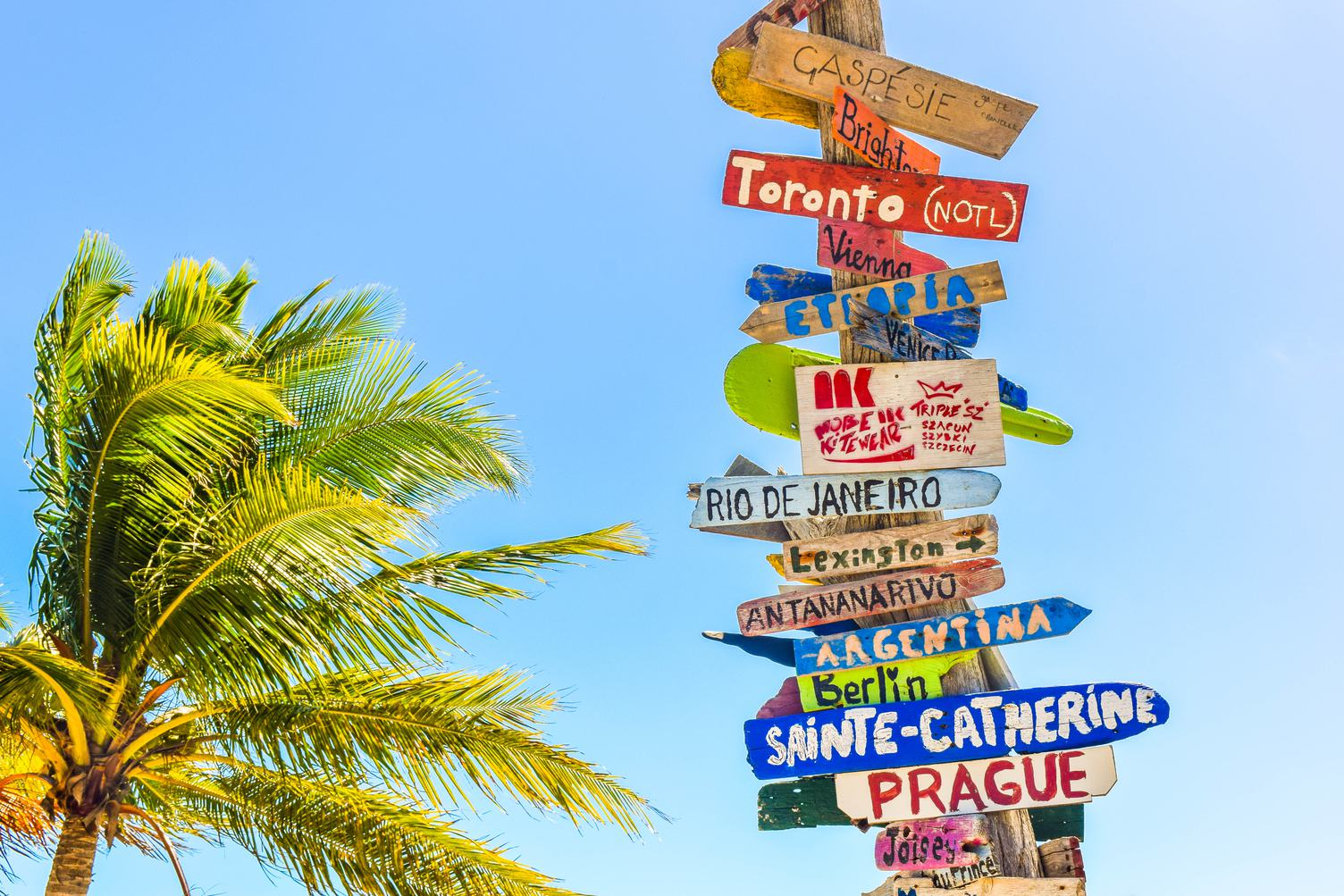 Colored Wooden Direction Signs against Sky and Palm Tree