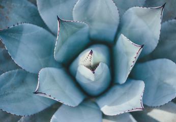 Closeup Cactus Succulent Plant