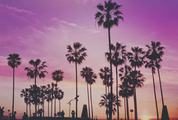 Palm Trees and People Silhouette against a Purple Sunset Sky