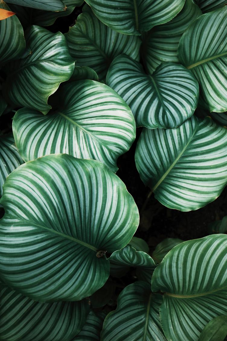 Green Big Leaves Texture