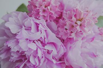 Close up of Pink Peony and Hyacinth Flowers