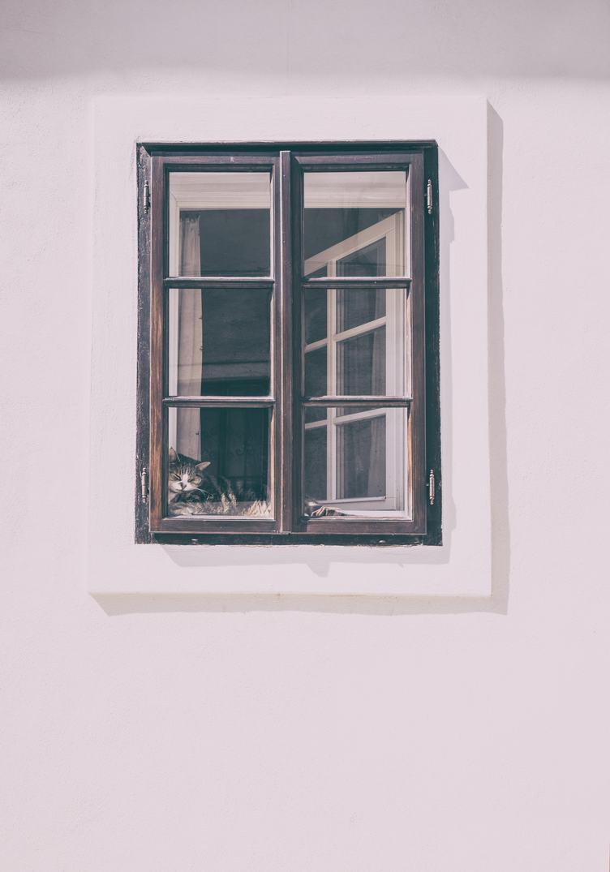 Cat Sleeping in the Window