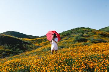 Young Woman Standing in Poppies Wiled Field Holding Red Umbrella
