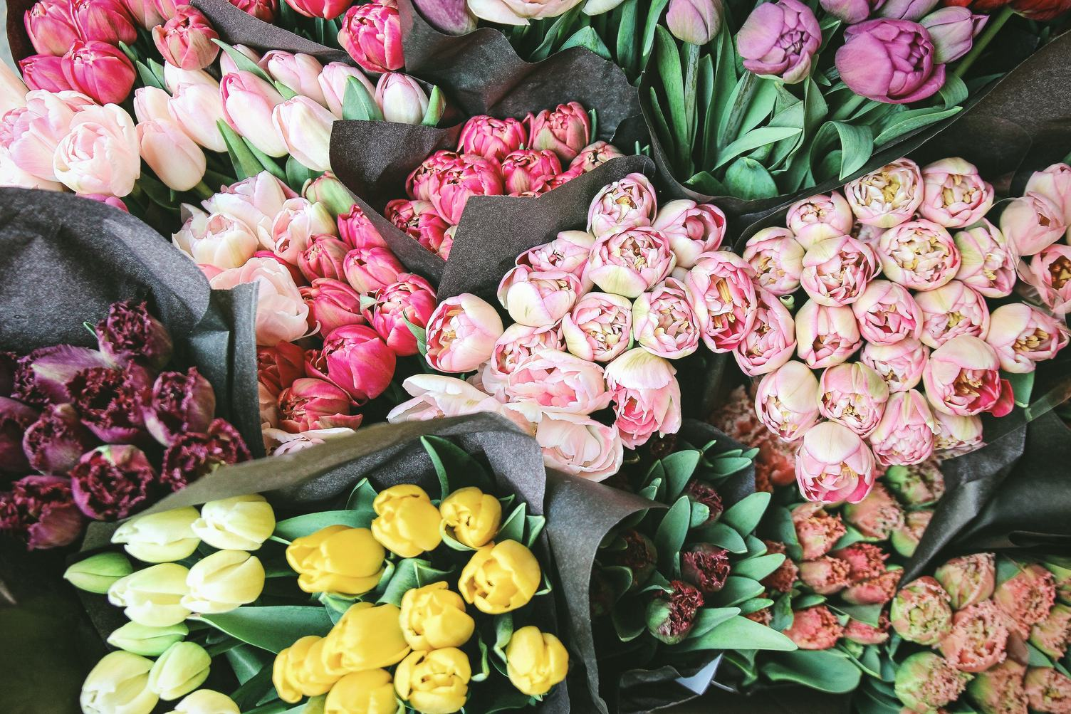 Top View of Beautiful Spring Flowers Tulips