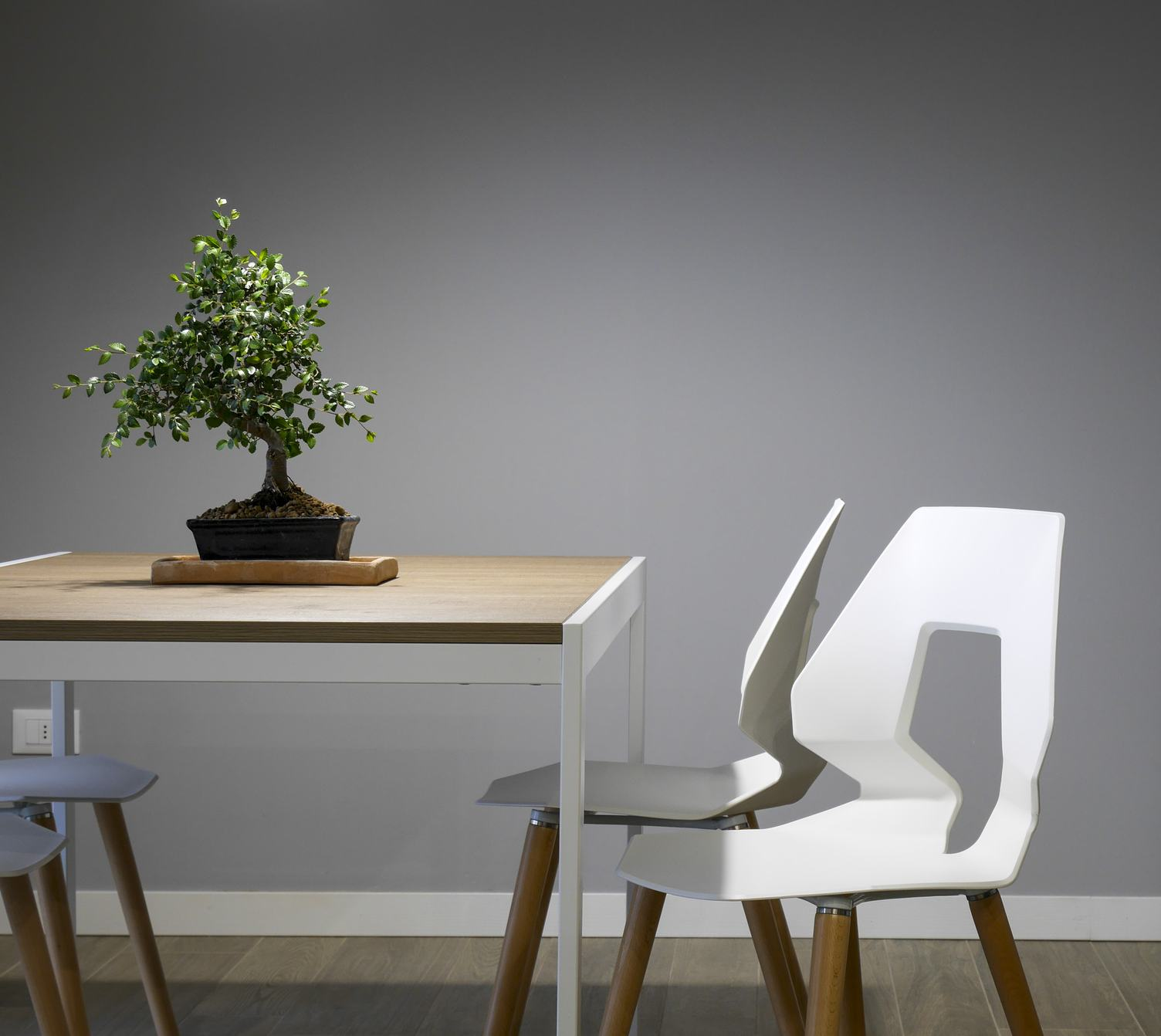 Table with Chairs and Small Bonsai Tree Minimal Interior Design