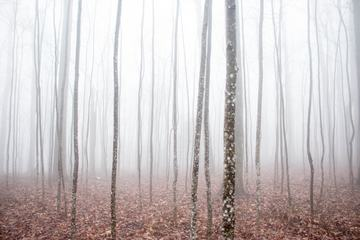 Misty Forest During an Autumn Day