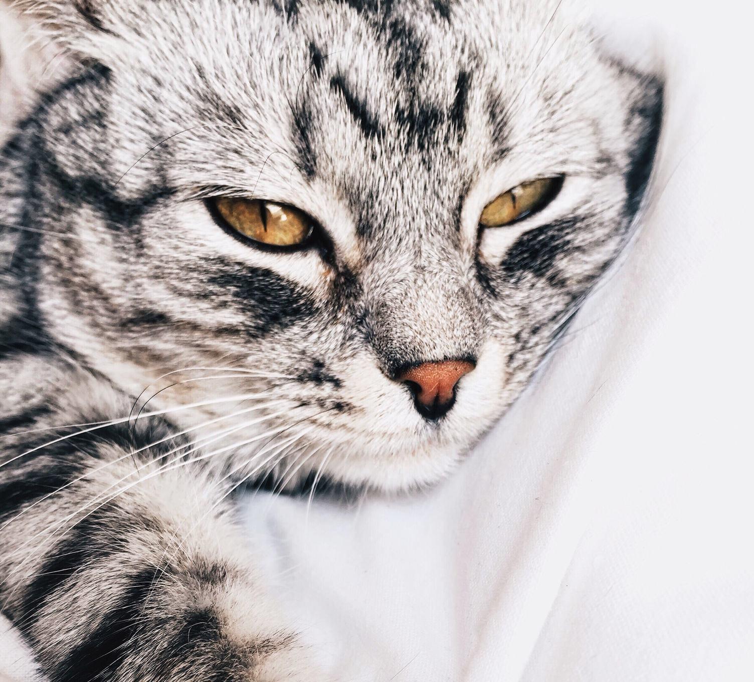 Sweet Animal - Cat Face Portrait