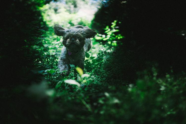 A Cheerful Dog Runs Through the Green Scrub