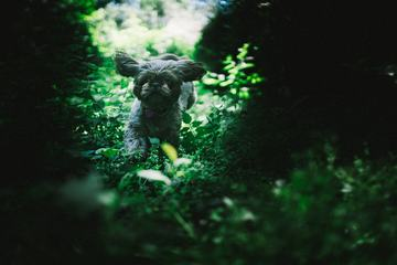 A Cheerful Dog Runs Through the Green Scrub