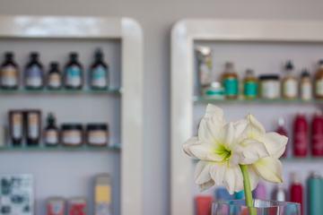 White Amaryllis in Vase