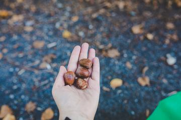 Acorn in the Hand