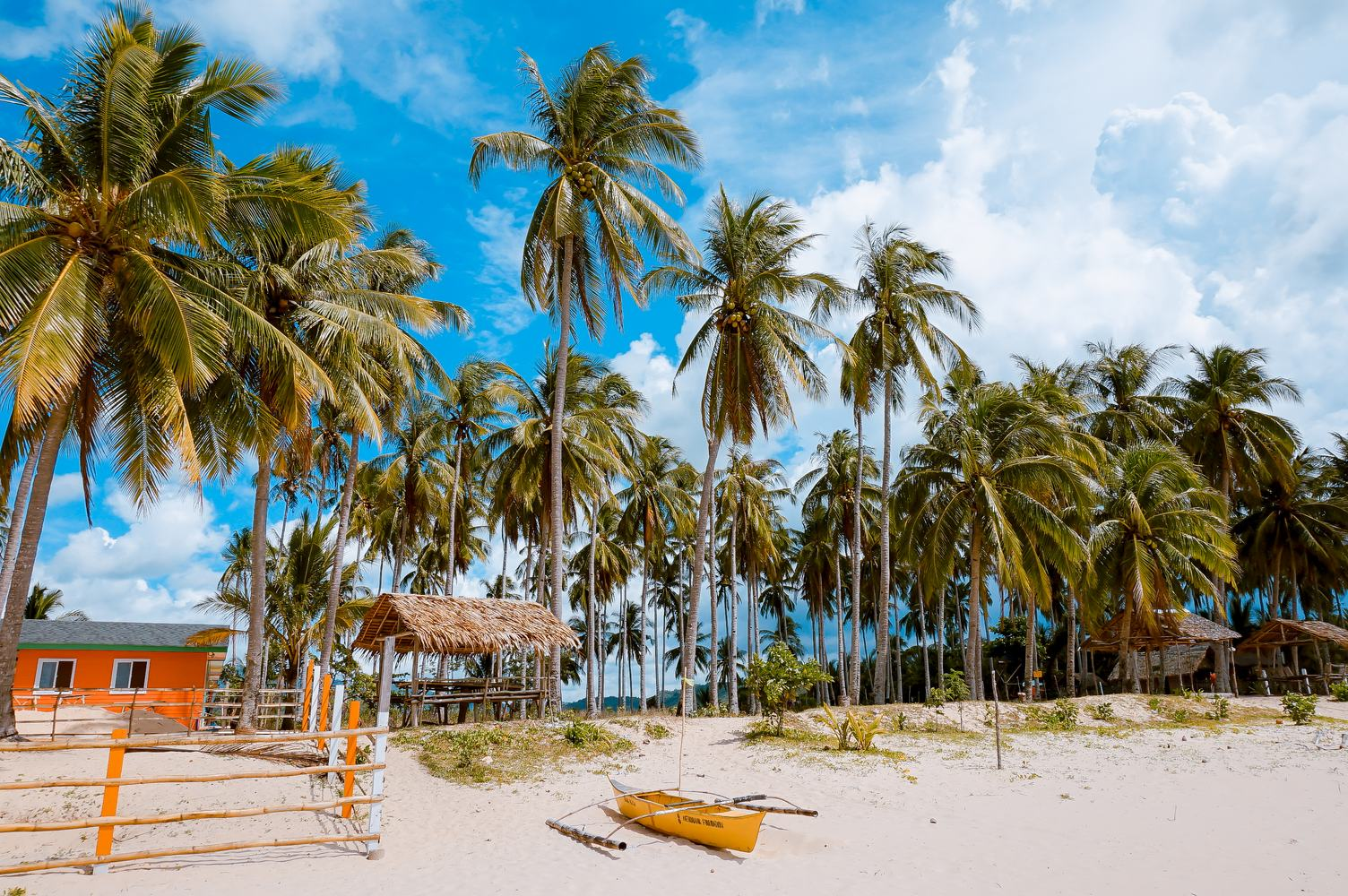 View of Nice Tropical Beach with Coconut Palms